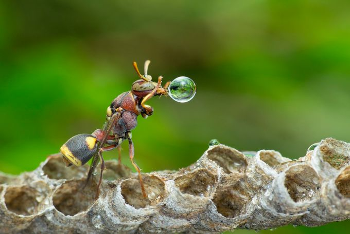 Wasp Blowing Water Bubble 170523 by carrot9817 - Bubbles Photo Contest