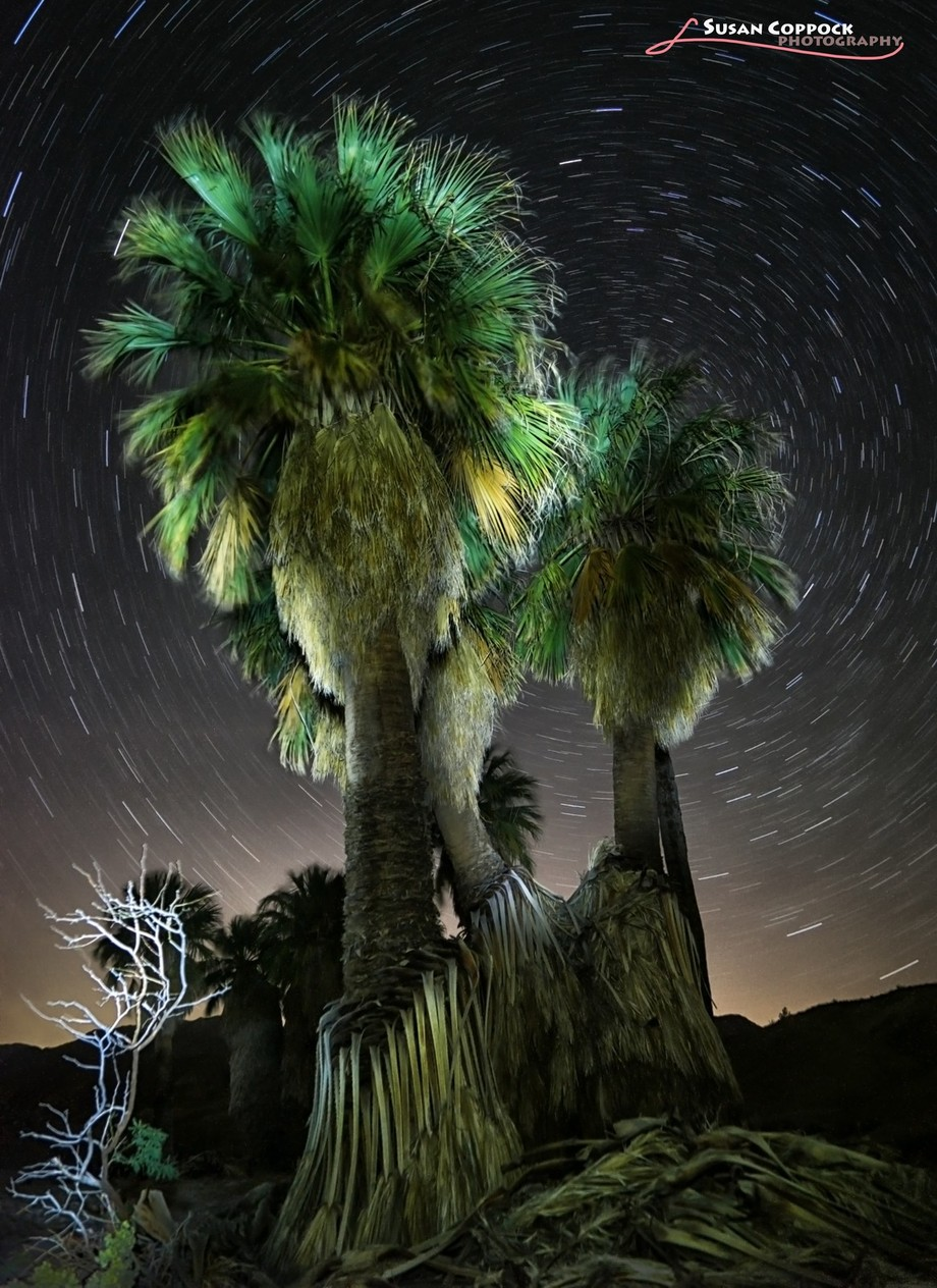 17 Palms Trails by Scopppock - Palm Trees Photo Contest
