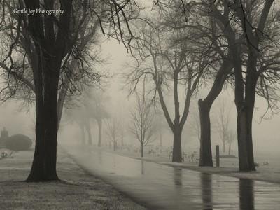 Fog black and white