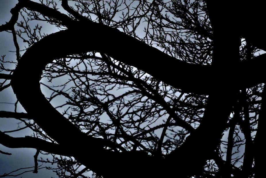 Tree Branch just before dusk