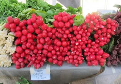 Radishes grown by Hmong people