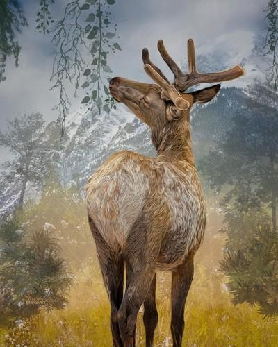 Elk - artistic rendition