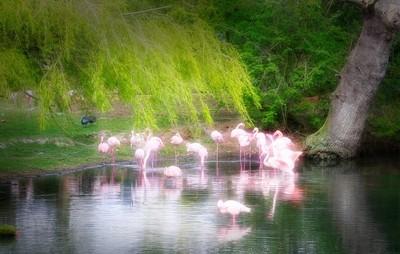 Flourecent Flamingo's