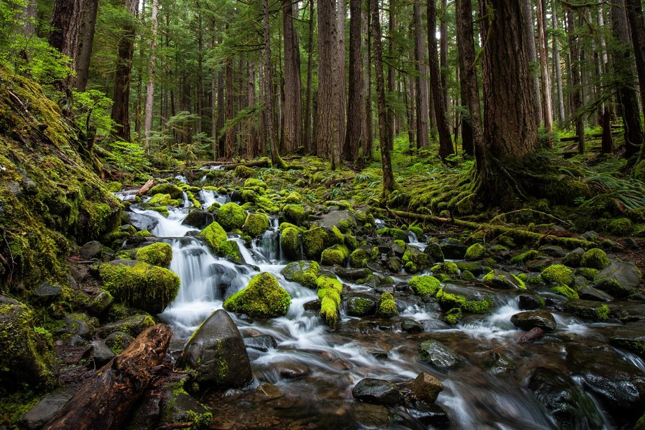 One of the many creeks that run into the Sol Duc River.  This photo was taken during the spring.