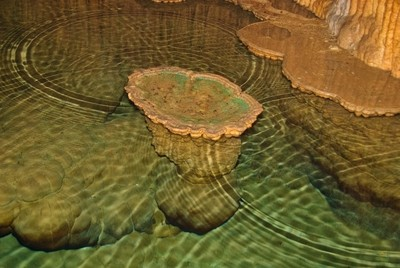 Infinity Ripples: Lily Pad formation at Onondaga Cave State Park