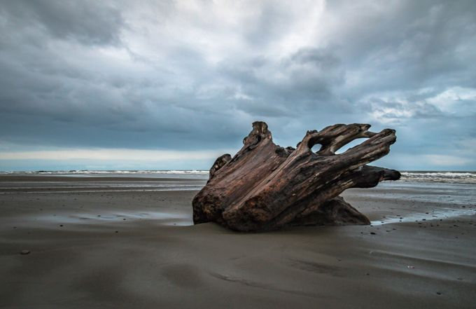 Kalaloch Driftwood by kathysuttles - Fallen Trees Photo Contest