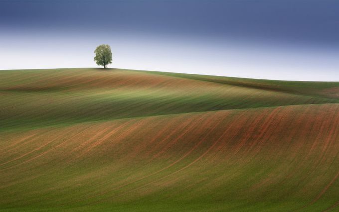story about tree by tadejturk - Isolated Photo Contest