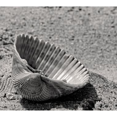 Seashell 1a BNW