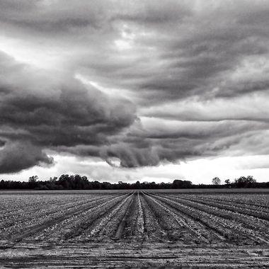 Stormy Rows BW