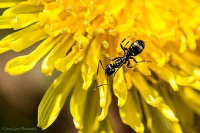 Speckled With Pollen