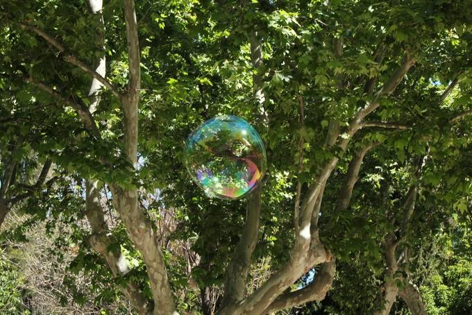 Bubble in the tree