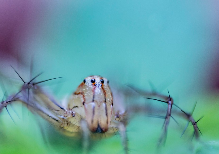 Hey Human,Take my photograph and make me famous says this spider.He/she was so friendly with came...