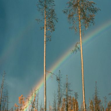 The year after the devastating fire in Yellowstone I took this photo of a rainbow arching over a stand of burnt trees.