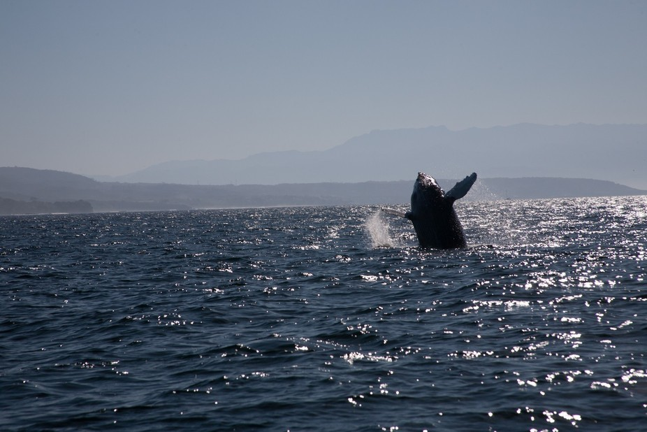 Captured this photo on a whale watching excursion in Puerto Vallarta, Mexico.  Normally shooting ...
