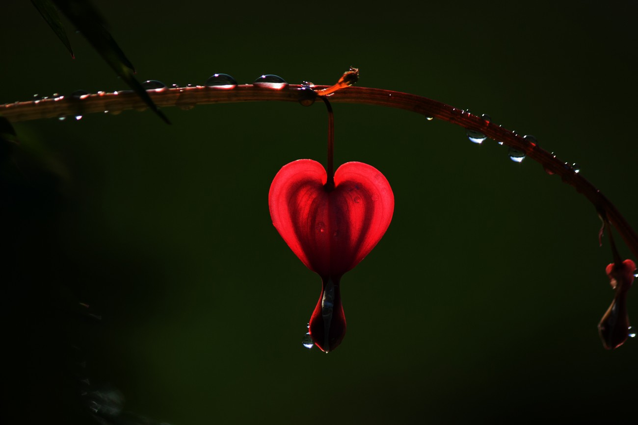 Heart of Heart