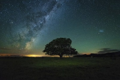 The Lone Tree Under the Milky Way