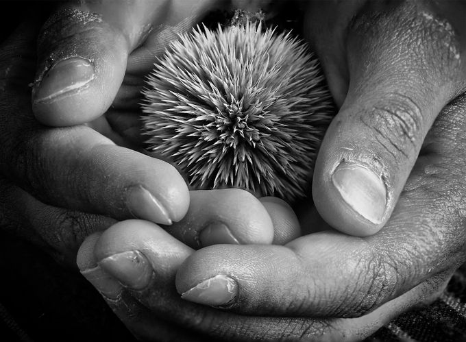 hands by HAFPhotography - Stillness Photo Contest