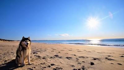 Jetson sunrise on Beach