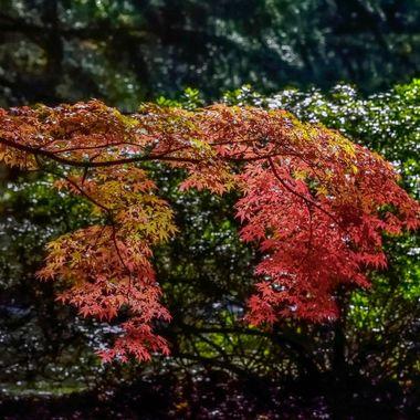 Colours of Mount Wilson (8), NSW, Australia
