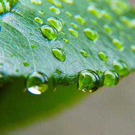 Some drops on a leaf!
