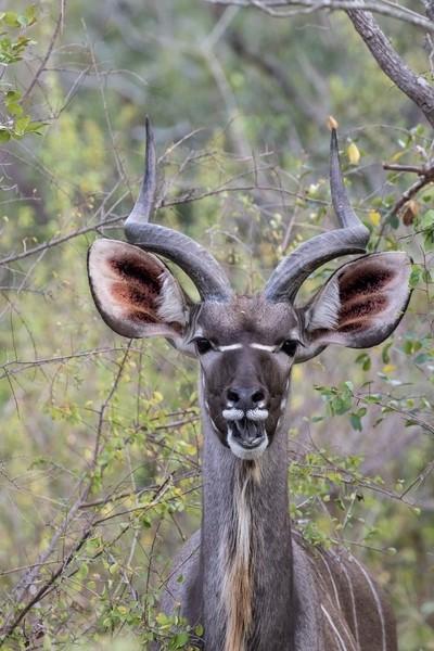 Kudu has its say!