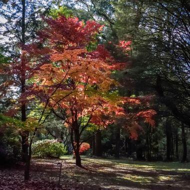 Colours of Mount Wilson (9), NSW, Australia