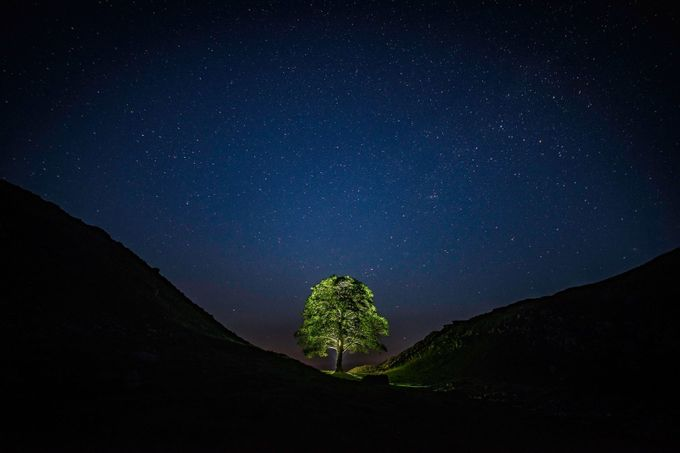 Tree In The Night by rossdixon - A Lonely Tree Photo Contest