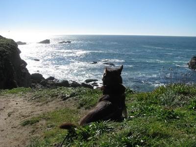 Phoenix watches the sea
