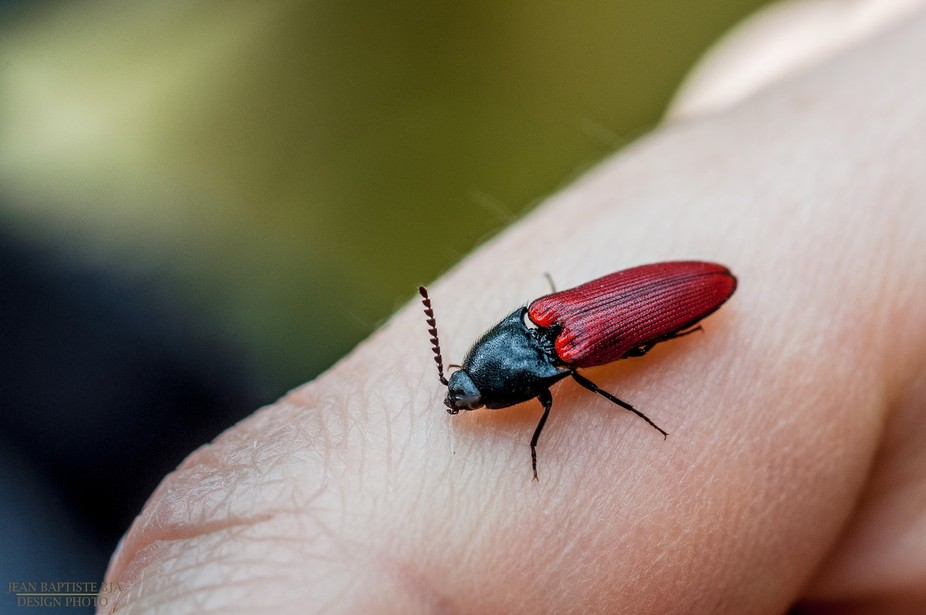 This bug has landed on my friend's finger! nice opportunity to catch it at just the righ...