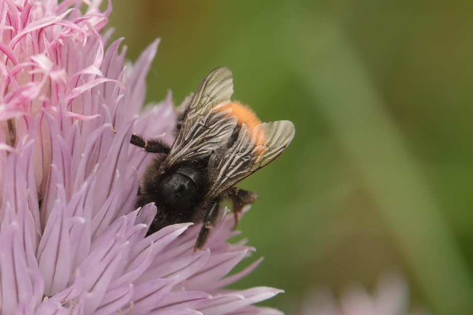 bees, I just love them