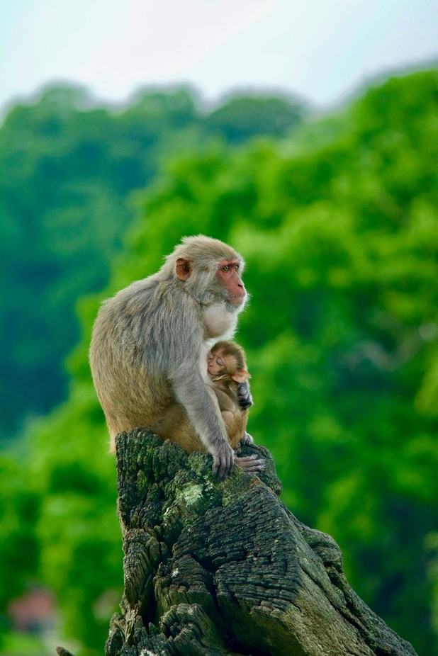 Together by mikerjones - Monkeys And Apes Photo Contest