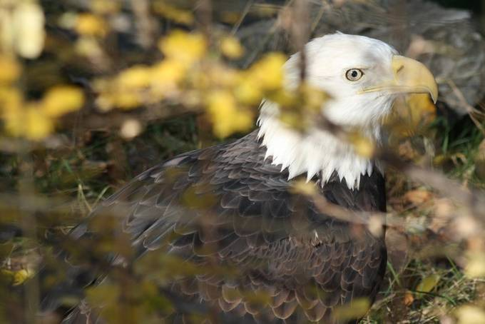 by Penny-K - Majestic Eagles Photo Contest