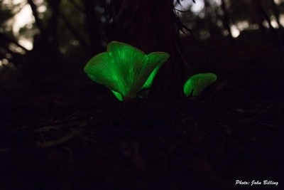 Ghost Fungi IMG_1775