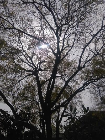 sun peeking from between the trees