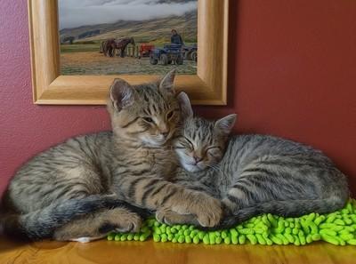Kittens at Cardrona