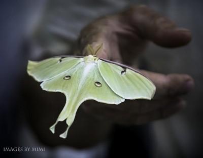 the moth no flame