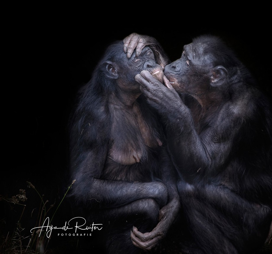 Along with the common chimpanzee, the bonobo is the closest extant relative to humans. The IUCN R...