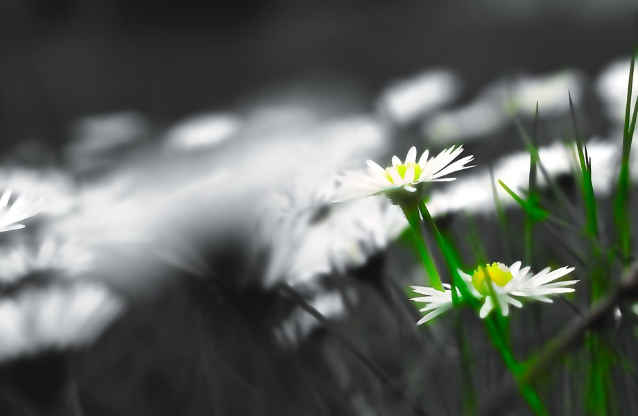 Only white flowers in a big green flat grass area, our spring/summer is arrived also in Sweden