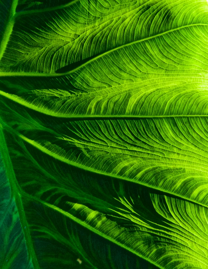 Green Plant by jlvia33 - Macro And Patterns Photo Contest