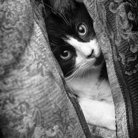 Several years ago we brought a new kitten into our home. Shortly afterwards we found him behind some pillows peeking at us. Couldn't resist ...
