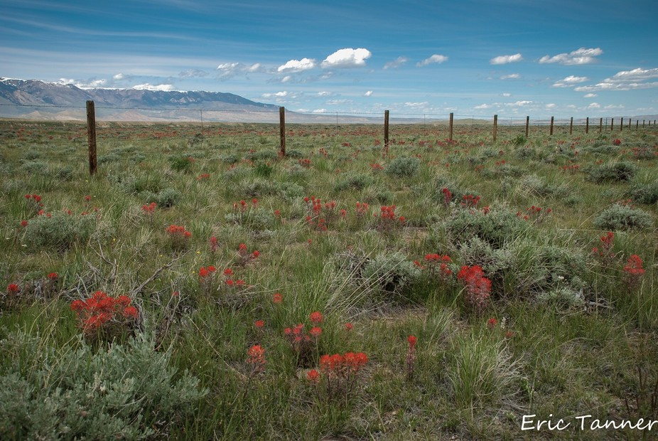 Wyoming state flower Indian Paintbrush. Tons of it.