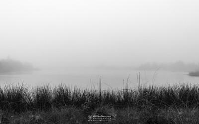 Foggy Westmeerven