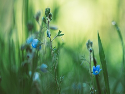 ** In the Meadow **