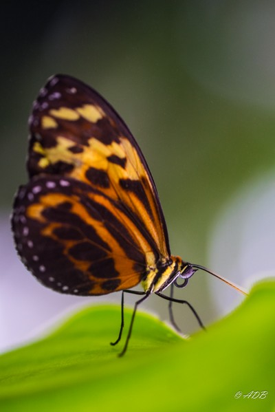 Up close with a Butterfly