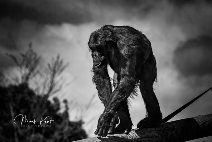 Welcome to the planet of the .... by flamesworddragon - Monkeys And Apes Photo Contest
