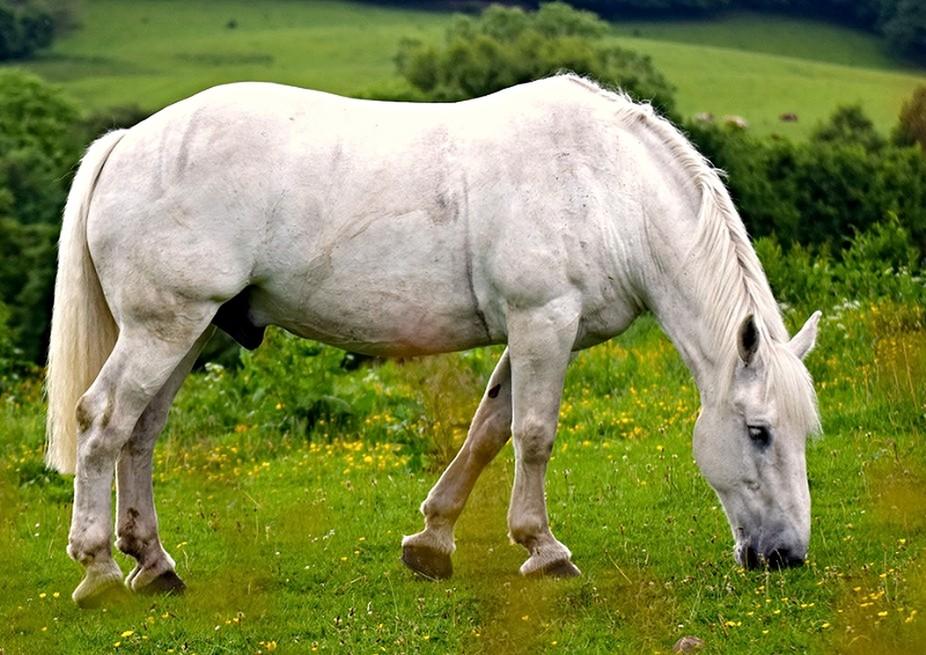 Horse DSC_0631 copy