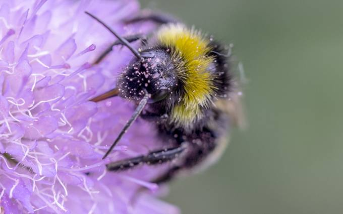Bumbling along by ncpcov - Macro Games Photo Contest