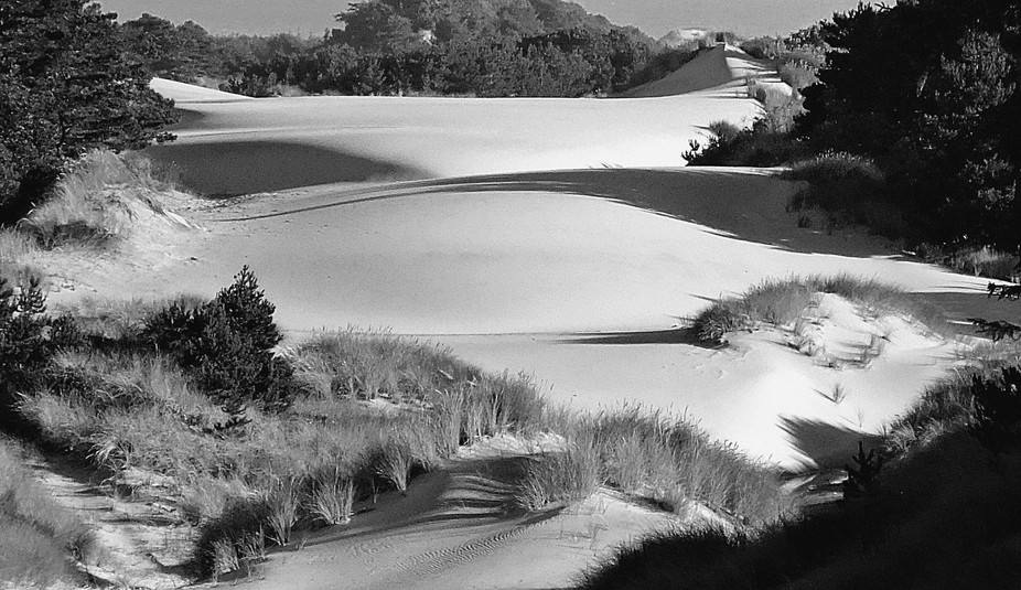 Dunes at Florence, Oregon in the Morning