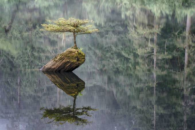 Fairy Lake Fir Tree by lakevermilionphotos - A Lonely Tree Photo Contest