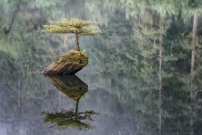 Fairy Lake Fir Tree